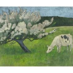 La vache blanche