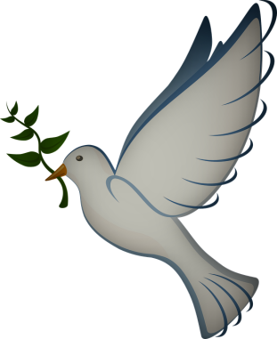 dove-41260_960_720.png